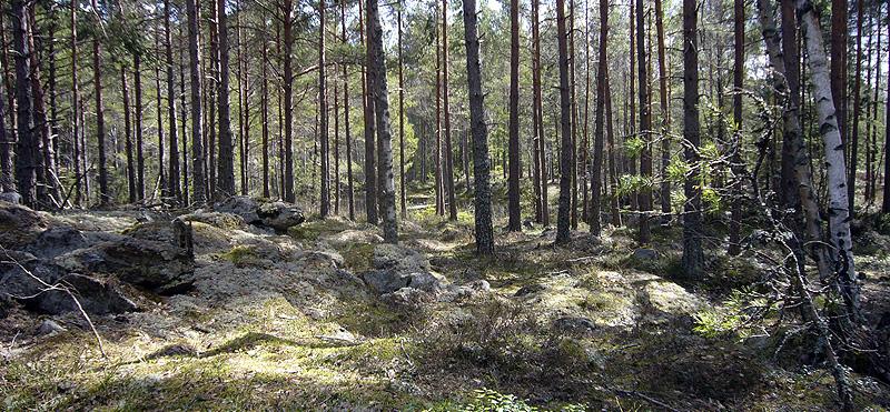 Fin skog