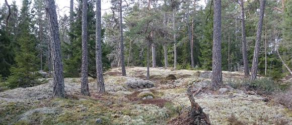 skog_5-1